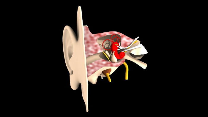 anatomia orecchio e acufeni